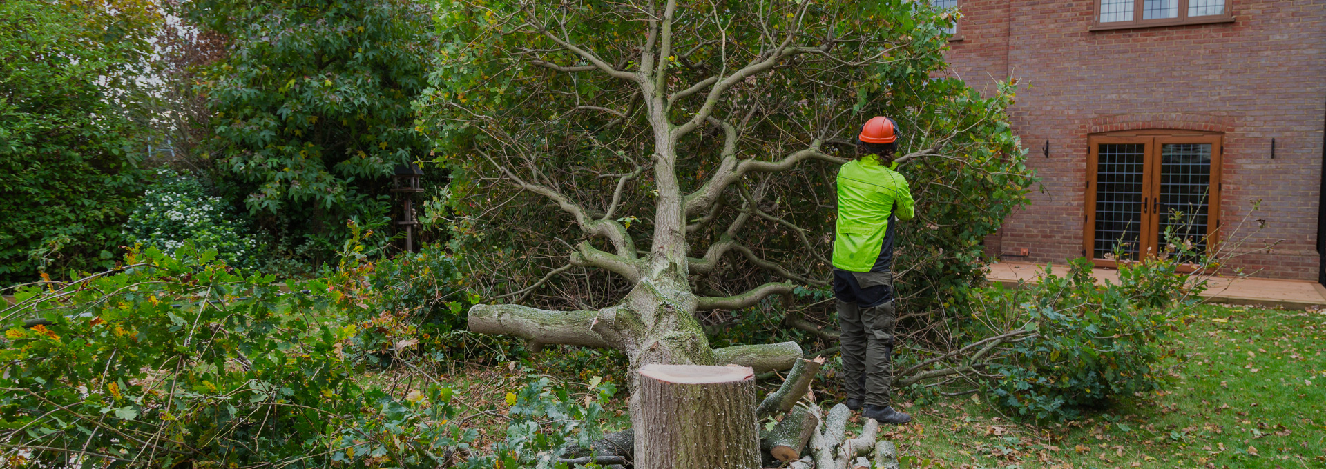 Tree Surgeon from Outback Landscapes captured during cutting the tree.